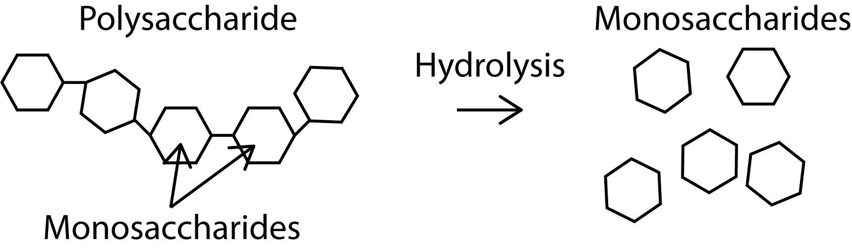 Carbohydrates synthesis classification and uses.