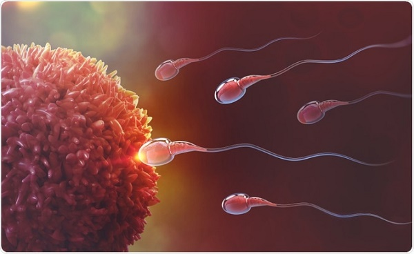 Ways to increase fertility naturally